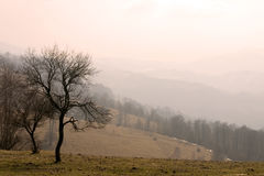 Sepia landscape Royalty Free Stock Images