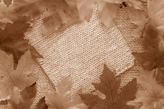 Sepia leaf background Stock Photography