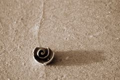 Sepia of spiral shell on textured sand. royalty free stock photography