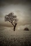 Sepia Moody Atmospheric Tree in Countryside Royalty Free Stock Photography