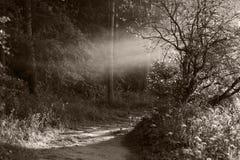 Sepia-Nebel Stockfotografie