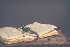 Sepia Photography of Green Plant on Top of Open Book Stock Photo