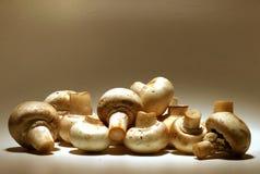 Sepia-Pilze lizenzfreie stockbilder