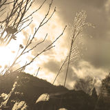Sepia plant cloudscape Royalty Free Stock Photos