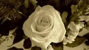Sepia Rose Imagen de archivo libre de regalías