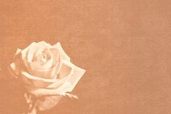 Sepia rose stationery Royalty Free Stock Image