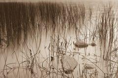 Sepia sjövegetation Fotografering för Bildbyråer