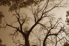 Sepia Spooky Dead Tree Stock Photos