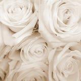Sepia stemde Witte Rozen Royalty-vrije Stock Afbeelding