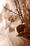 Sepia still life of autumn leaf flower arrangement. Sepia still life of autumn leaf arrangement in pottery vase; light shines through translucent leaves Royalty Free Stock Photos