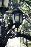 Sepia style photo of antique street lantern among tree branches. vintage filtered image Stock Images