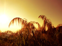 Sepia of Sunrise in the morning Stock Images