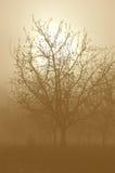 Sepia-Ton-bloße Walnuss-Bäume Lizenzfreies Stockbild