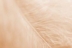Sepia tonad fjäder arkivfoto