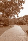 Sepia Tone of Brick Paver Walkway in the Garden. Vertical Photo Royalty Free Stock Images