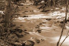 Sepia Tone Image de um córrego selvagem da truta da montanha imagens de stock