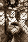 Sepia tone of Monkey hand touching a cage, lack of independence Royalty Free Stock Photos