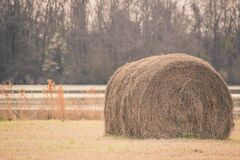 Sepia Tone Photography of Hay on Field Royalty Free Stock Images