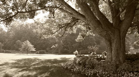 Sepia-toned park scene Royalty Free Stock Images