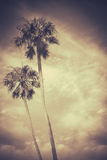 Sepia Toned Retro Palms Royalty Free Stock Images