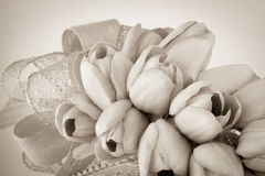 Sepia toned tulips with ribbon Royalty Free Stock Photos