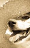 Sepia tonte das Bild des Schoßhunds einen Strohsonnenhut am Strand tragend Stockfotografie