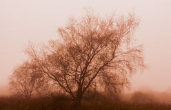 Sepia tree in fog Royalty Free Stock Image