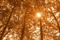 Sepia trees Stock Photo