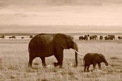 Sepia van moeder en kalfsolifant in Kenia stock afbeelding