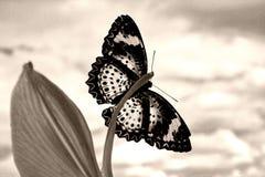 Sepia vlinder Royalty-vrije Stock Foto's