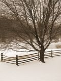 Sepia Winter Tree and Fence. This is a toned photo of a bare tree and fence after a fresh snowfall royalty free stock photography