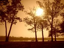Sepia Zonsondergang in het Park Royalty-vrije Stock Afbeelding
