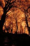 Sepiabäume Lizenzfreie Stockfotografie
