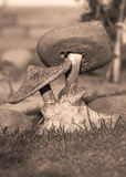sepiastengiftsvamp arkivfoto