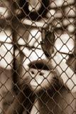 Sepiaton der Affehand einen Käfig, Mangel berührend an Unabhängigkeit Lizenzfreie Stockfotos