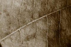 Sepiatonundeutlicher Makrohintergrund des trockenen Blattes, Fokus auf Mitte des Bildes Stockbilder