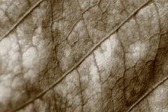 Sepiatonundeutlicher Makrohintergrund des trockenen Blattes, Fokus auf Mitte des Bildes Lizenzfreies Stockfoto