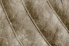 Sepiatonundeutlicher Makrohintergrund des trockenen Blattes, Fokus auf Mitte des Bildes Stockfotos