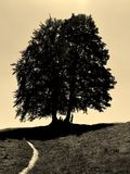 Sepiowa fotografia duzi cieni drzewa na wzgórzu z piaskowatą ścieżką Zdjęcie Royalty Free