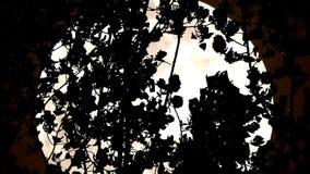Sepiowa księżyc w drewnach zdjęcie wideo