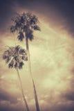 Sepiowe Stonowane Retro palmy obrazy royalty free