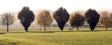 Sepiowy fotografii lub drzew pasmo Zdjęcia Royalty Free