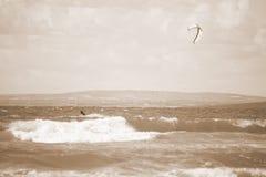 Sepiowy kania surfingowiec na pięknych fala Fotografia Royalty Free