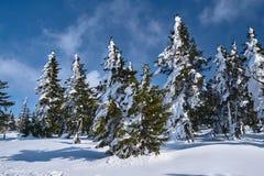 Sepolto nella foresta della neve ed in alberi asciutti Immagini Stock