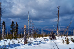 Sepolto nella foresta della neve ed in alberi asciutti nelle montagne giganti Immagini Stock Libere da Diritti