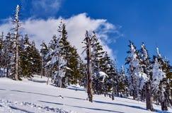 Sepolto nella foresta della neve ed in alberi asciutti nelle montagne giganti Immagini Stock