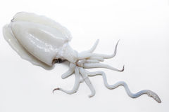 Seppia cruda e fresca Calamaro spagnolo Choco fotografie stock