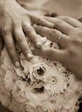 Seppia degli anelli di cerimonia nuziale Fotografie Stock Libere da Diritti