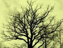 Seppia di silhuette dell'albero fotografia stock