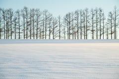 Sept colline douce en hiver, Biei, Hokkaido, Japon image libre de droits